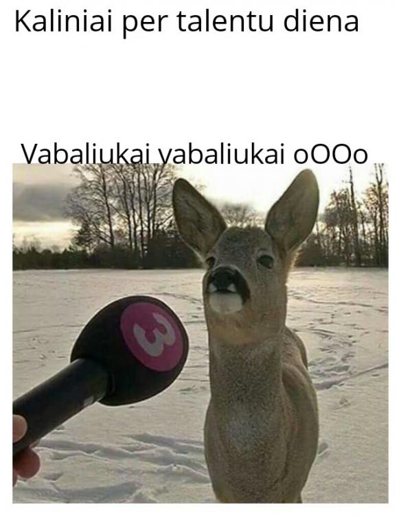 Deer Being Interviewed 01032021104452.jpg